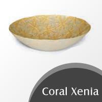 Coral-Xenia